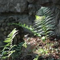 GardenBuddha